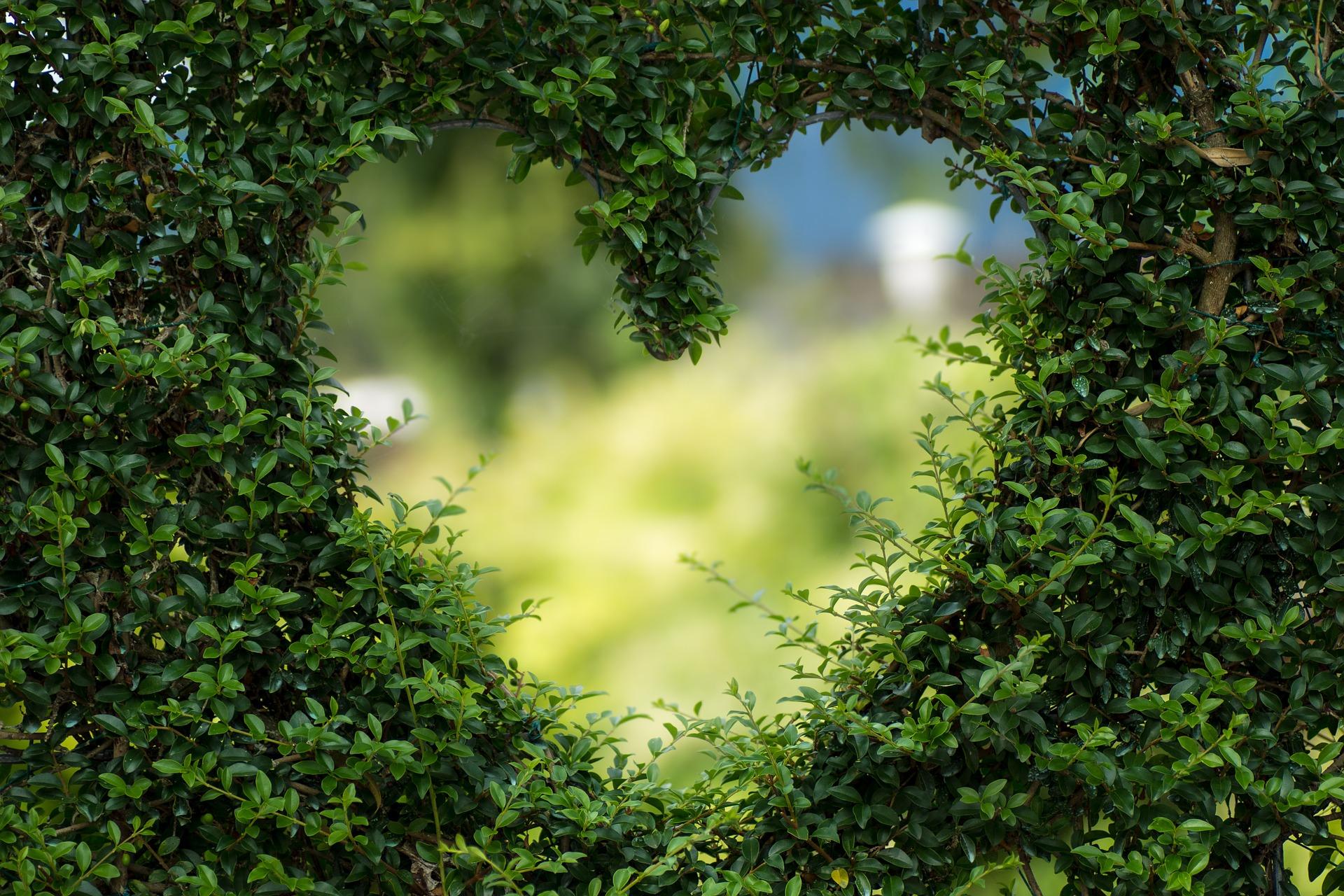 Heart hedge