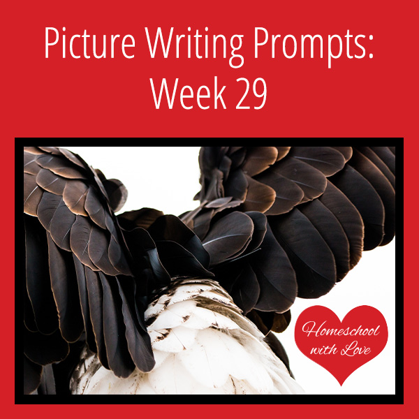 Picture Writing Prompts Week 29